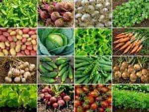 plant based diet plan